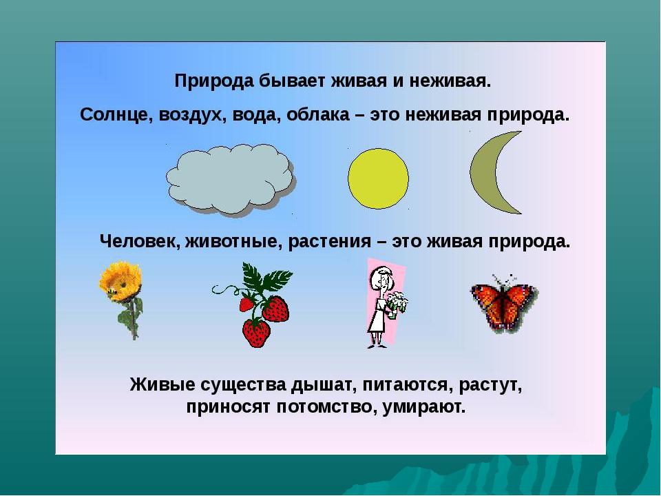 Живая и неживая природа для детей картинки с 11