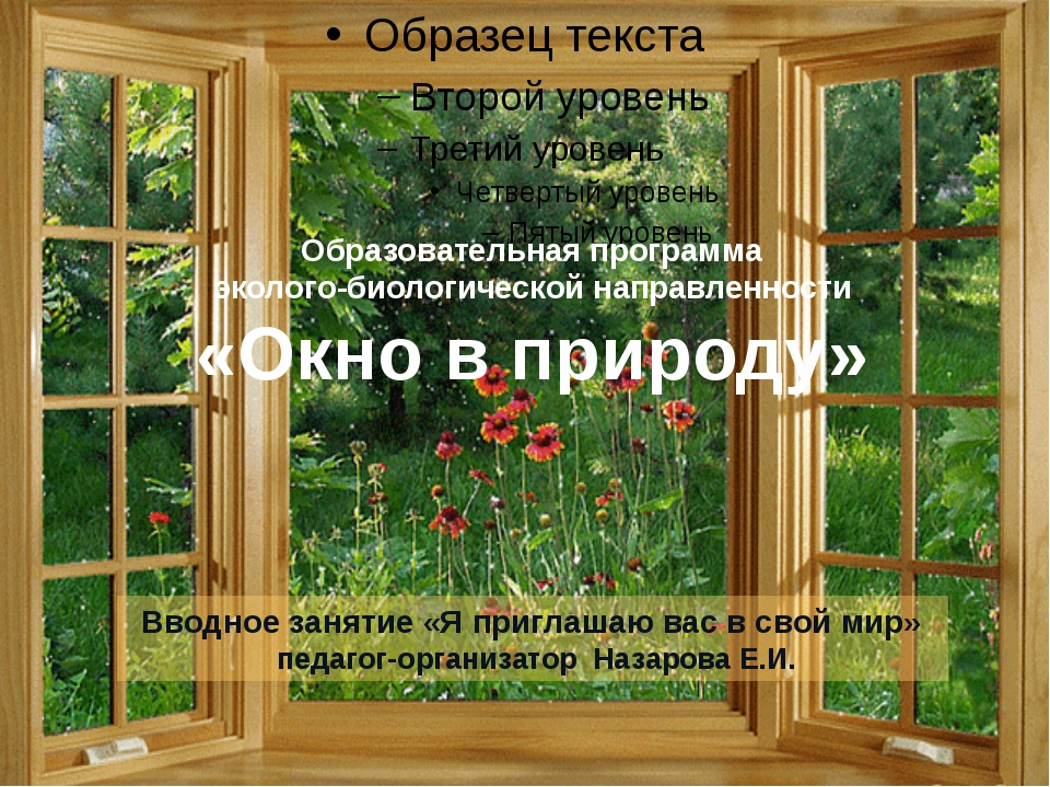 Образовательная программа эколого-биологической направленности «Окно в природ...