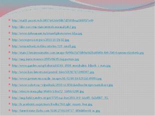 http://stat11.privet.ru/lr/0817662efc08b7d5501baa384f957e49 http://like-zoo.c