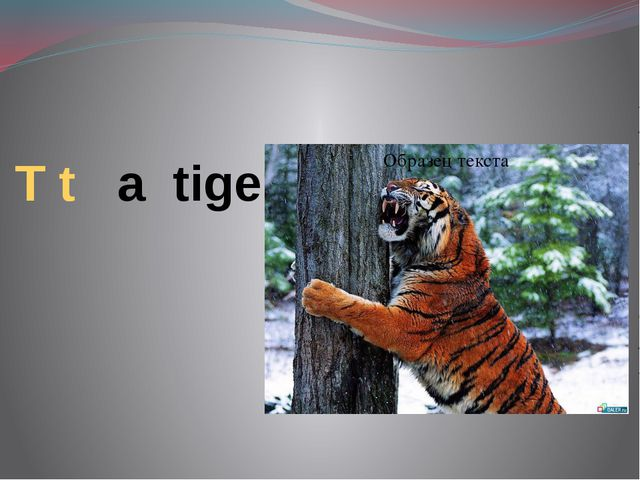 T t a tiger