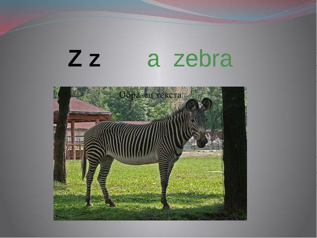 Z z a zebra