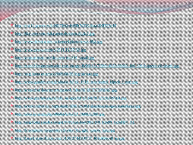 http://stat11.privet.ru/lr/0817662efc08b7d5501baa384f957e49 http://like-zoo.c...