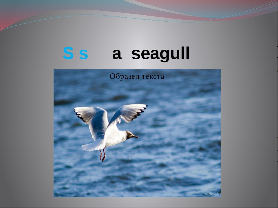 S s a seagull
