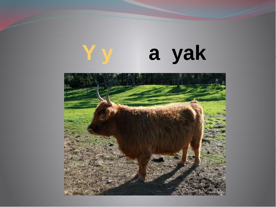 Y y a yak
