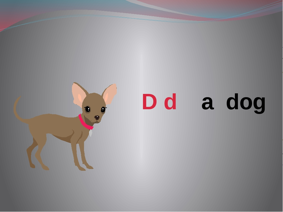 D d a dog