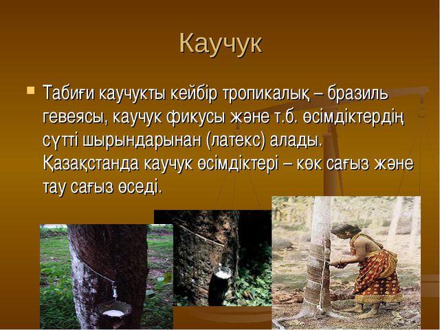 Каучук Табиғи каучукты кейбір тропикалық – бразиль гевеясы, каучук фикусы жән...