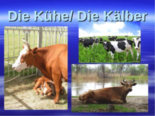 Die Kühe/ Die Kälber