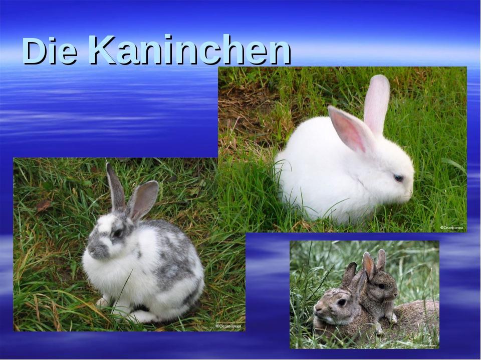Die Kaninchen