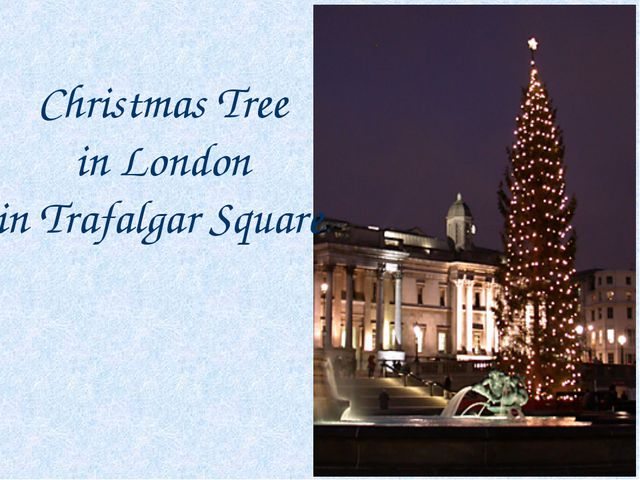 Christmas Tree in London in Trafalgar Square.
