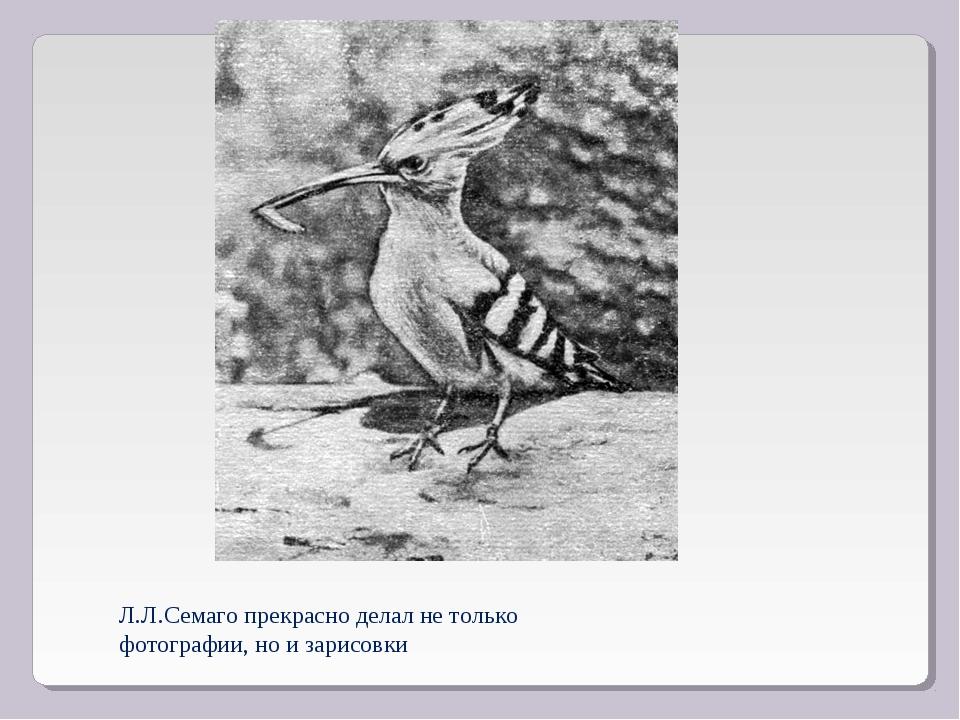 Л.Л.Семаго прекрасно делал не только фотографии, но и зарисовки