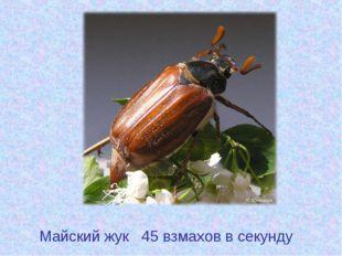 Майский жук 45 взмахов в секунду