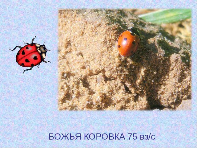 БОЖЬЯ КОРОВКА 75 вз/с
