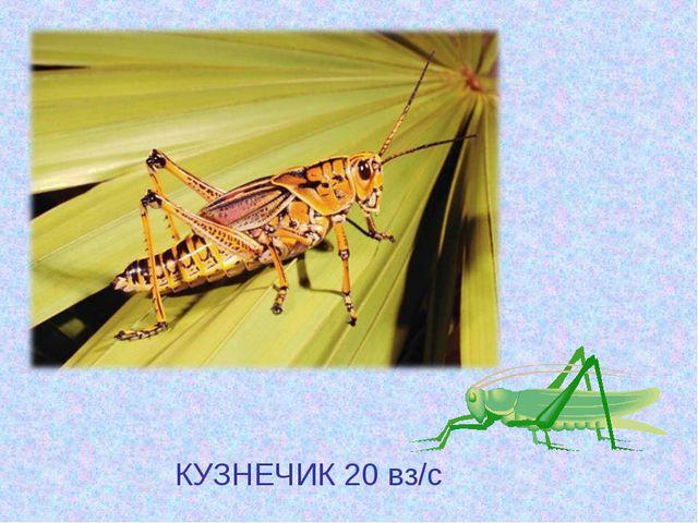 КУЗНЕЧИК 20 вз/с