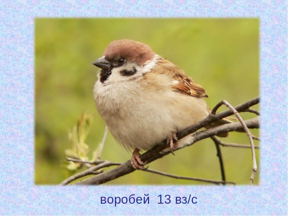 воробей 13 вз/с