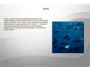 Тунец Тунец - одна из самых распространенных рыб. Он превосходный пловец и в