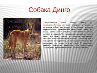 Собака Динго Австралийская дикая собака динго, изсемейства собачьих, по всей