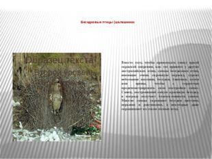 Беседковые птицы (шалашники)  Вместо того, чтобы привлекать самку яркой окр