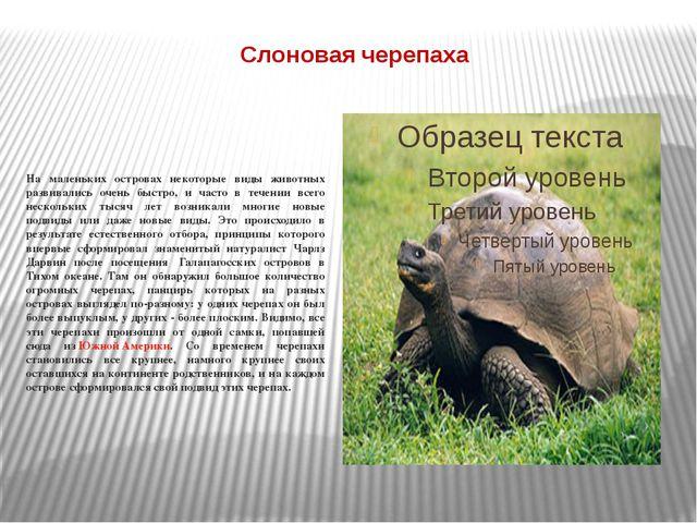 Слоновая черепаха На маленьких островах некоторые виды животных развивались о...