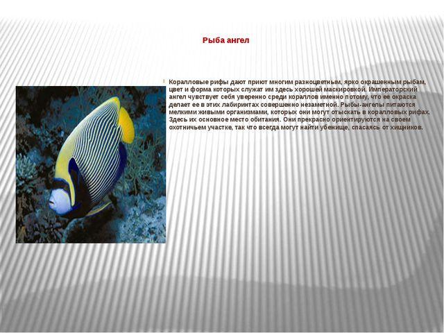 Рыба ангел  Коралловые рифы дают приют многим разноцветным, ярко окрашенным...