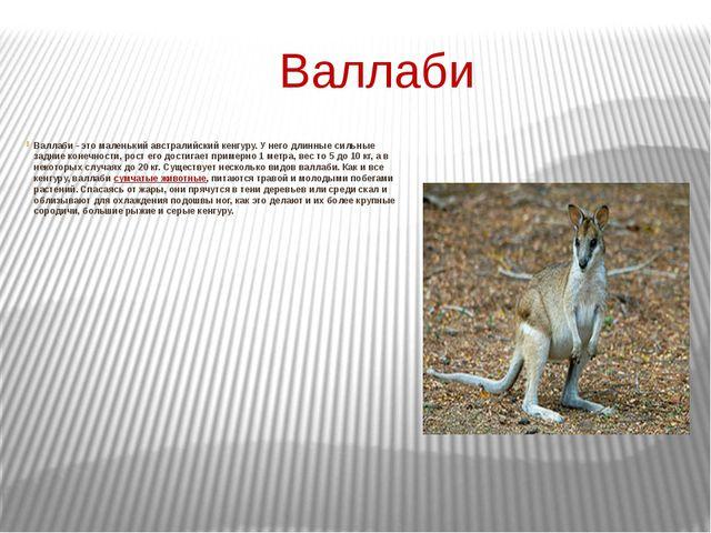 Валлаби Валлаби - это маленький австралийский кенгуру. У него длинные сильны...