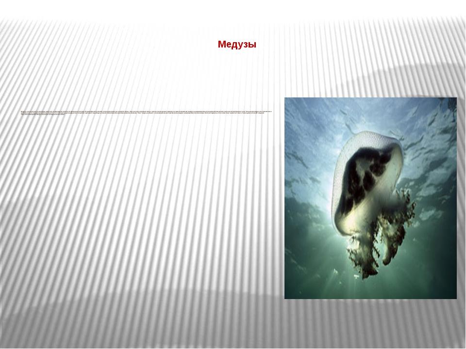 Медузы  Медузы - это очень просто устроенные животные, не имеющие ни скелет...