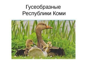 Гусеобразные Республики Коми