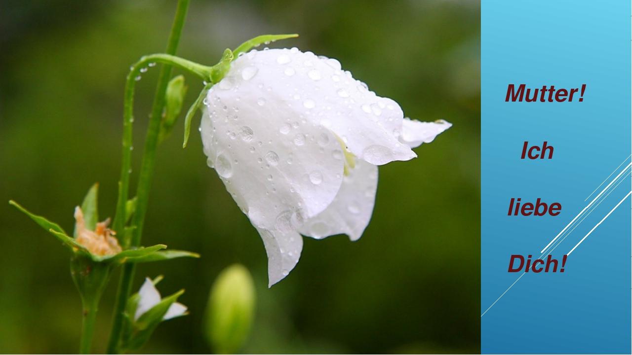 Цветы белые колокольчики