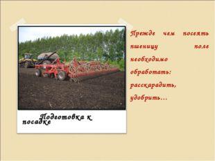 Прежде чем посеять пшеницу поле необходимо обработать: расскарадить, удобрить