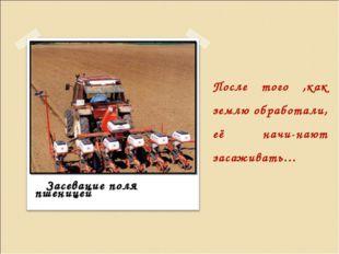 После того ,как землю обработали, её начи-нают засаживать… Засевание поля пше