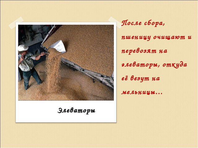 После сбора, пшеницу очищают и перевозят на элеваторы, откуда её везут на мел...