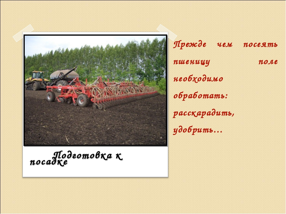 Прежде чем посеять пшеницу поле необходимо обработать: расскарадить, удобрить...