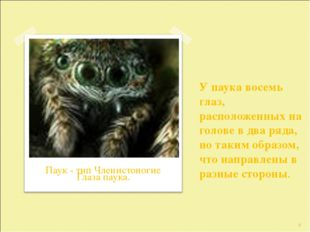 У паука восемь глаз, расположенных на голове в два ряда, но таким образом, чт