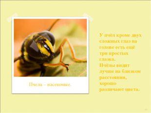 У пчёл кроме двух сложных глаз на голове есть ещё три простых глазка. Пчёлы в