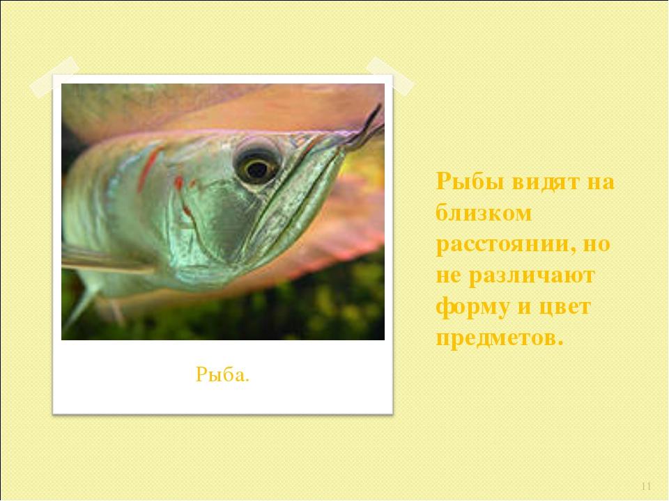 Рыбы видят на близком расстоянии, но не различают форму и цвет предметов. * Р...
