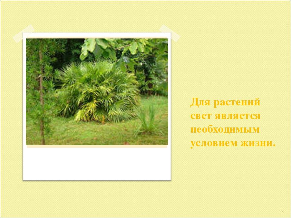 Для растений свет является необходимым условием жизни. *