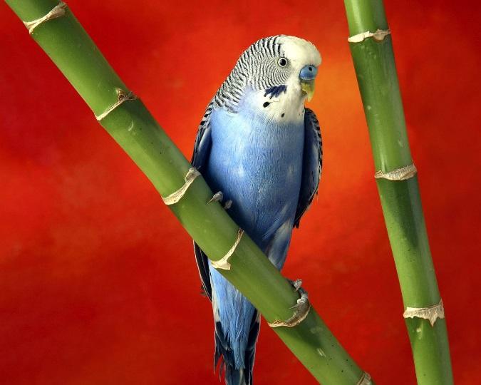 попугай Животные animals HD 664171371
