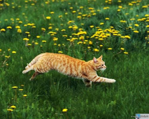 Котоматрица: Глаза горят, усы нарастопырку Идет по полю, ускоряя шаг Когда ваш кот найдет