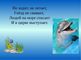 Не ходит, не летает, Гнёзд не свивает, Людей на море спасает И в цирке выступ