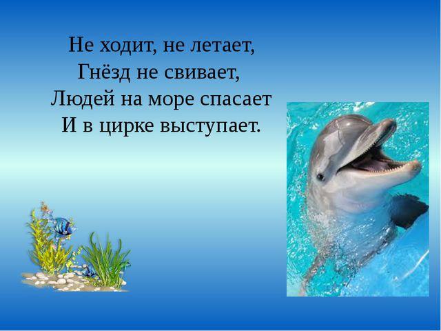 Не ходит, не летает, Гнёзд не свивает, Людей на море спасает И в цирке выступ...