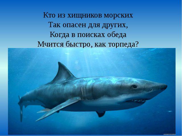 Кто из хищников морских Так опасен для других, Когда в поисках обеда Мчится б...