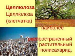 Целлюлоза Целлюлоза (клетчатка) - наиболее распространенный растительный поли