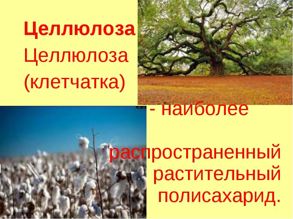 Целлюлоза Целлюлоза (клетчатка) - наиболее распространенный растительный поли...
