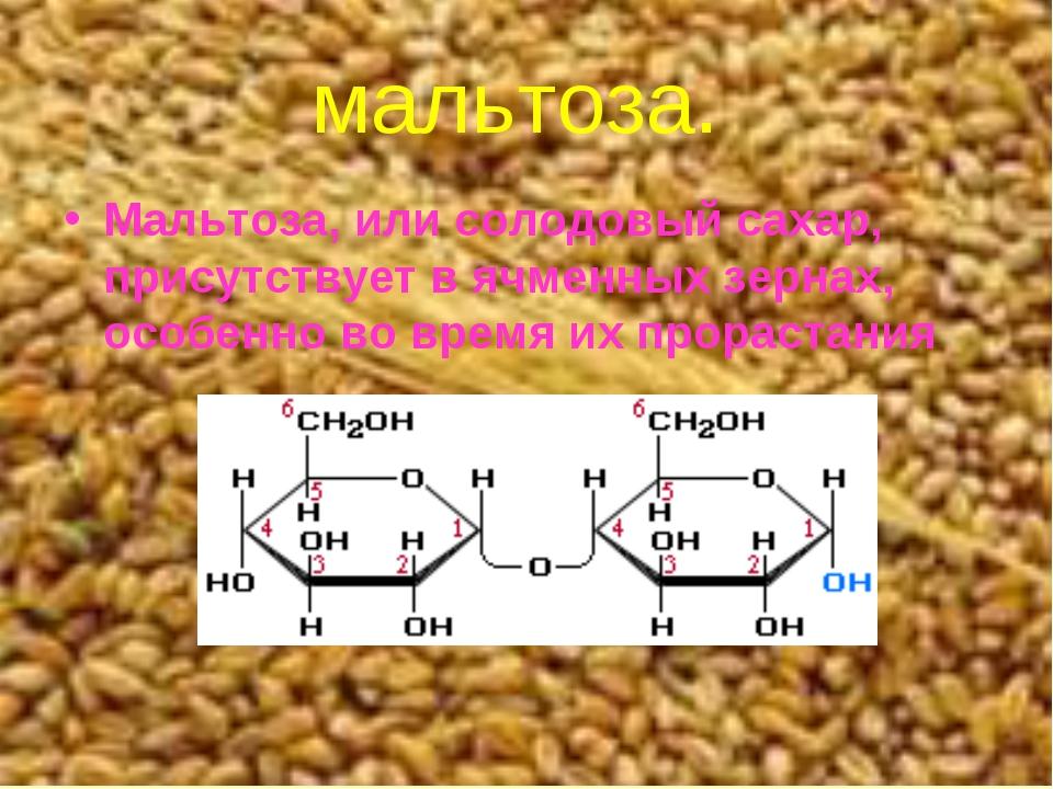мальтоза. Мальтоза, или солодовый сахар, присутствует в ячменных зернах, особ...
