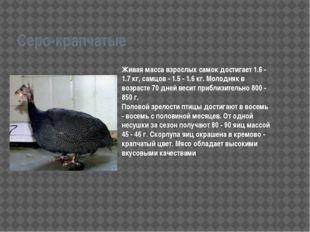 Серо-крапчатые Живая масса взрослых самок достигает 1.6 - 1.7 кг, самцов - 1.