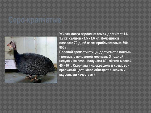 Серо-крапчатые Живая масса взрослых самок достигает 1.6 - 1.7 кг, самцов - 1....