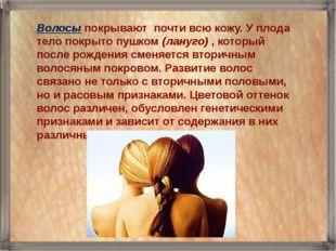 Волосы покрывают почти всю кожу. У плода тело покрыто пушком (лануго) , котор
