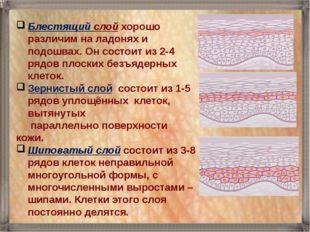 Блестящий слой хорошо различим на ладонях и подошвах. Он состоит из 2-4 рядов
