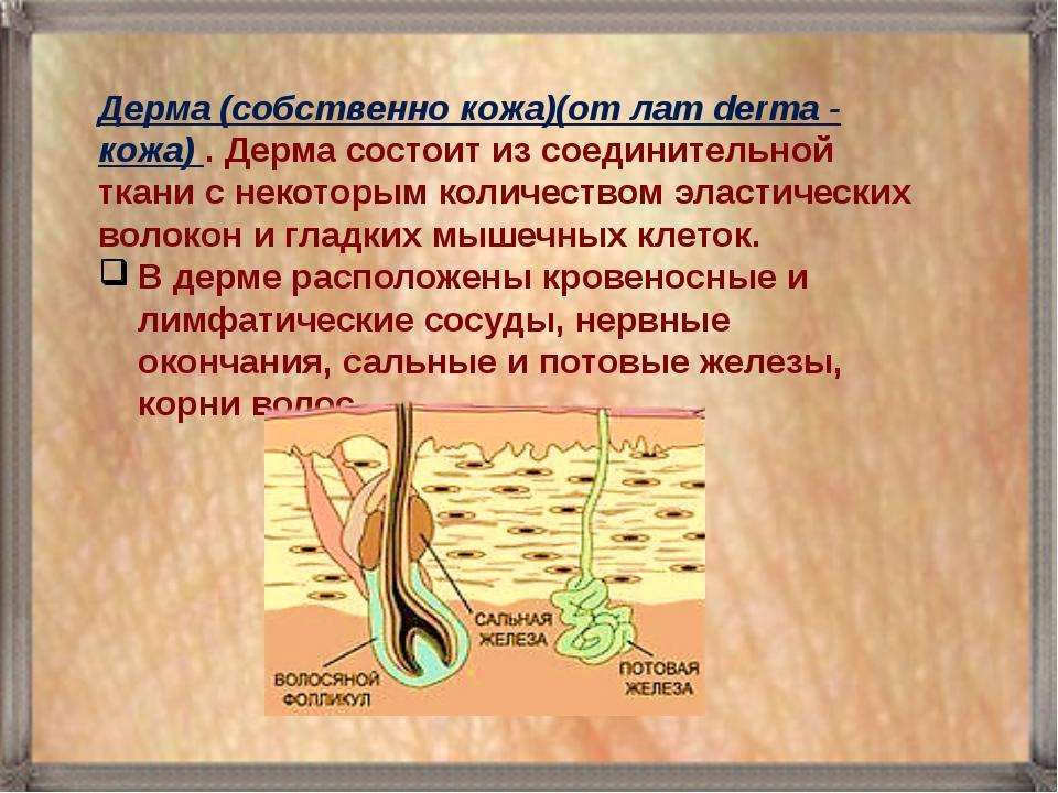 Дерма (собственно кожа)(от лат derma - кожа) . Дерма состоит из соединительно...