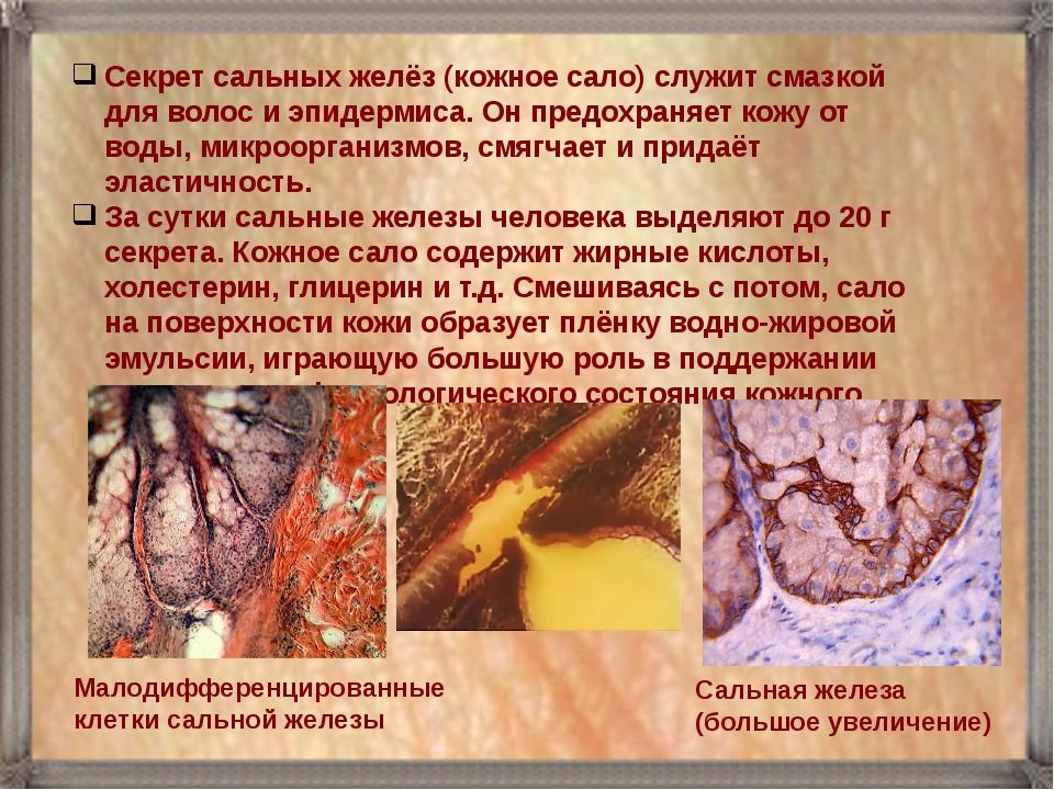 Секрет сальных желёз (кожное сало) служит смазкой для волос и эпидермиса. Он...