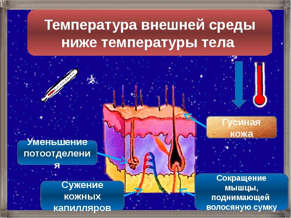 Температура внешней среды ниже температуры тела Гусиная кожа Уменьшение потоо...